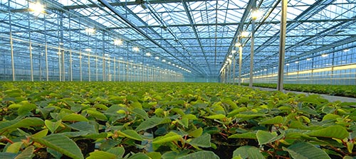 Remote Monitoring for Agriculture and Greenhouses